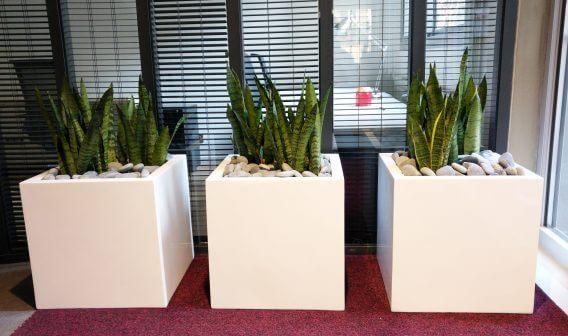 bacs de plantes