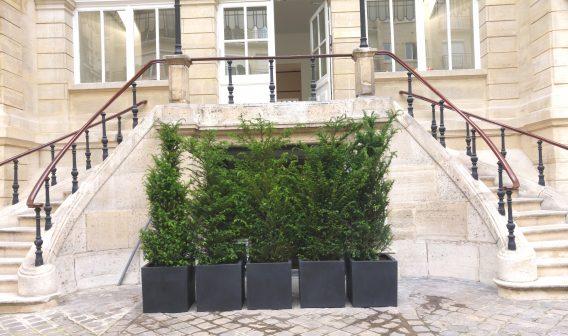 location de plantes entreprise