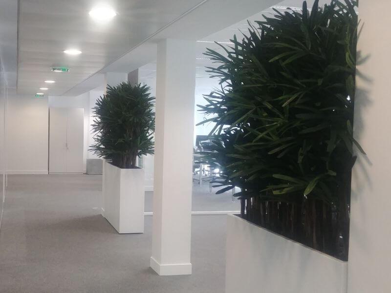 arbres d'intérieur