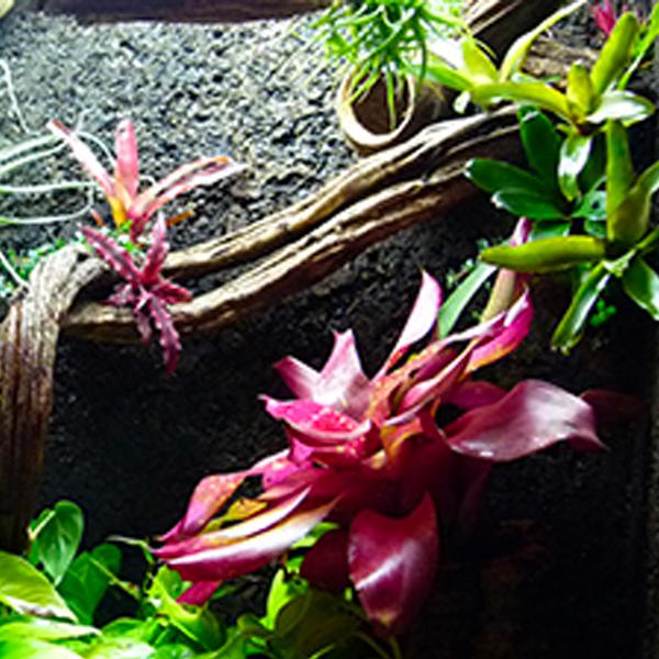 terrarium tropical