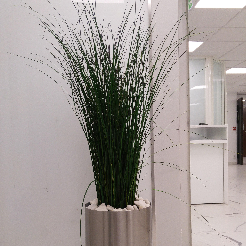 plante stabilisée